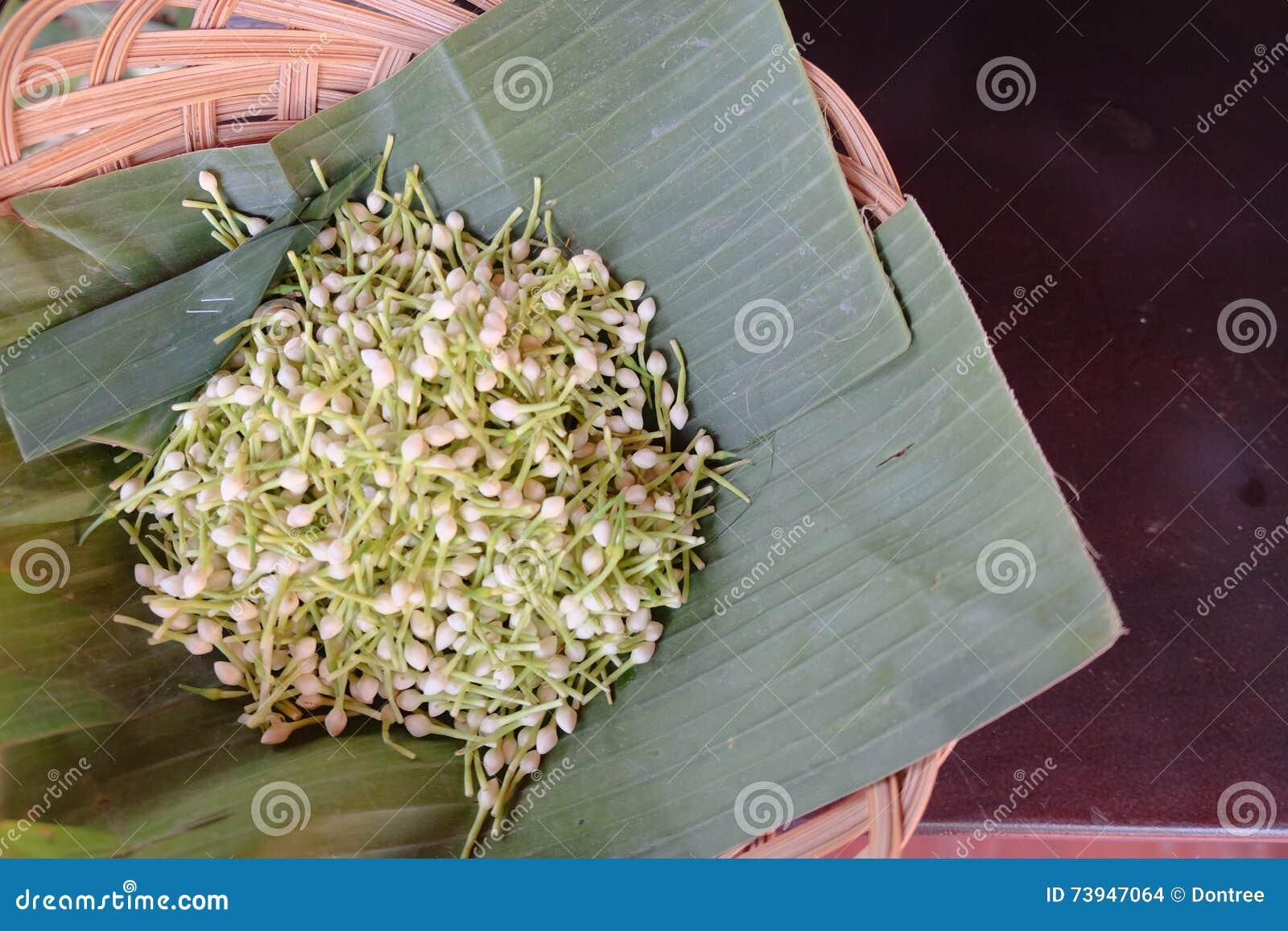 Jasmine Flower White For Make Garland Stock Photo Image Of