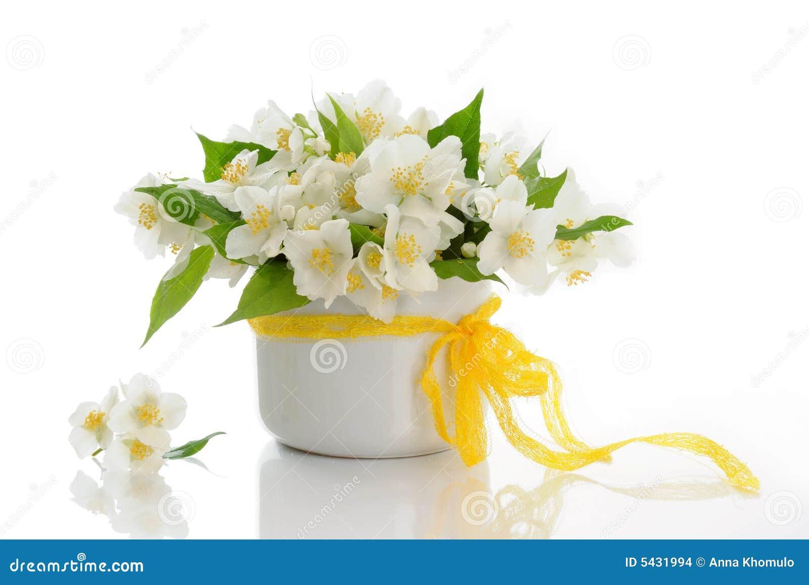Bunch of jasmine flowers stock image image of isolated 14462017 jasmine flowers stock images izmirmasajfo