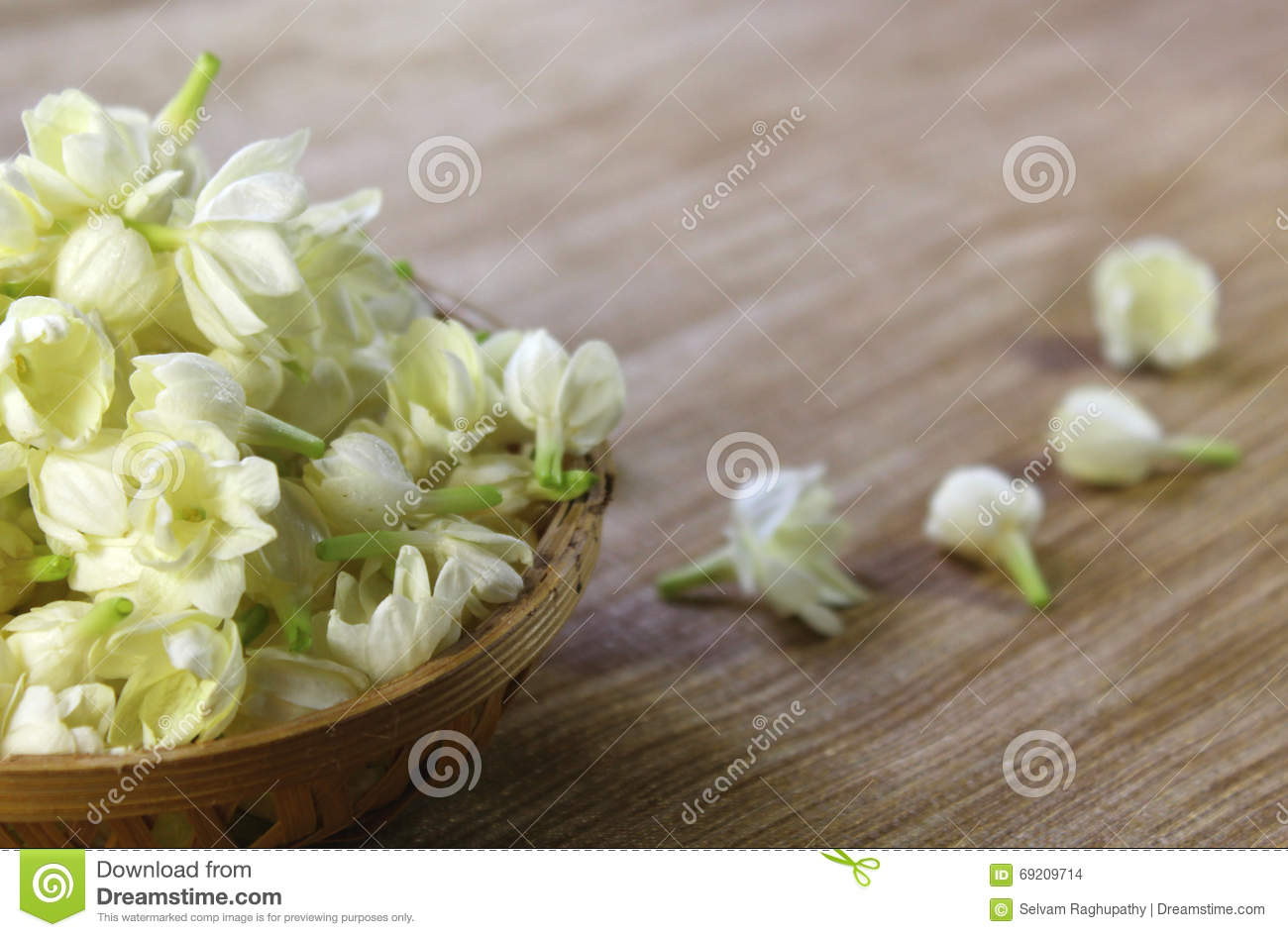 Jasmine Flowers In A Basket Stock Photo Image Of Blooming Blossom