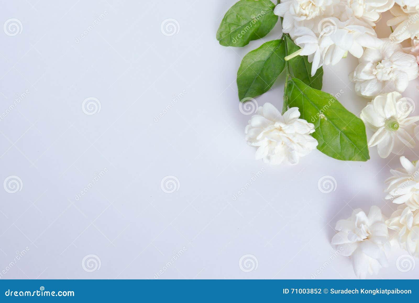 Jasmine flowers on white background stock photo image of green jasmine flowers on white background izmirmasajfo Gallery