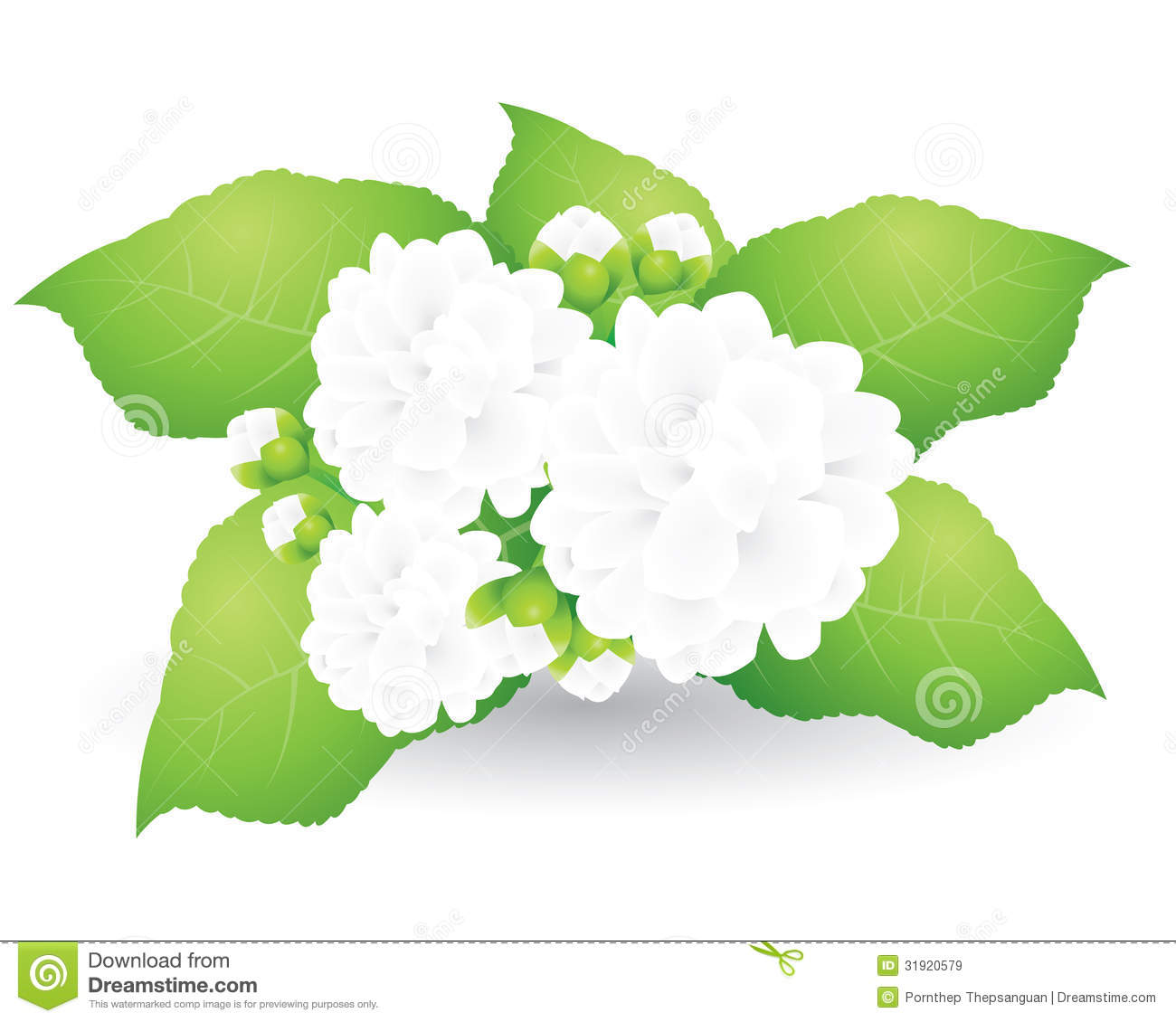 Jasmine Flower Vector Free Download 2018 Images Pictures