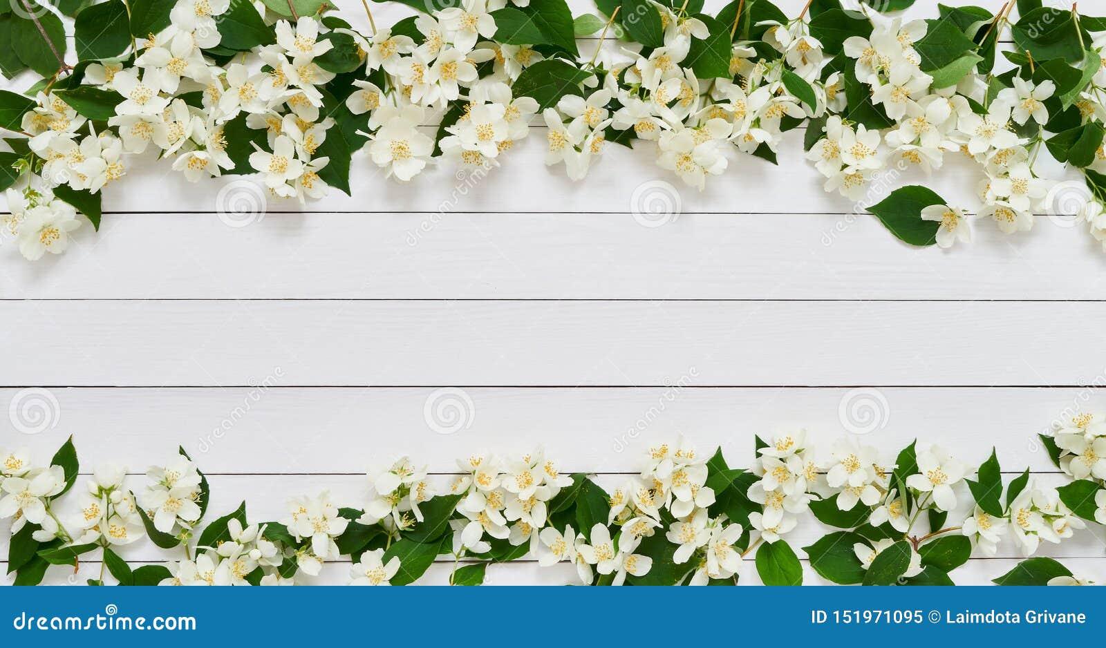 jasmine philadelphus or mockorange flowers border on