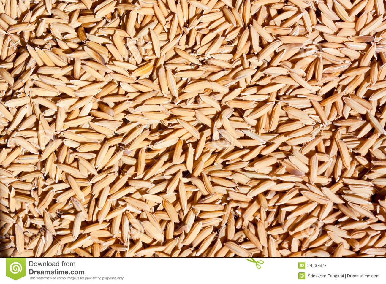 Rice seed for planting - Jasmine Rice Seed Texture Rice Of Thailand