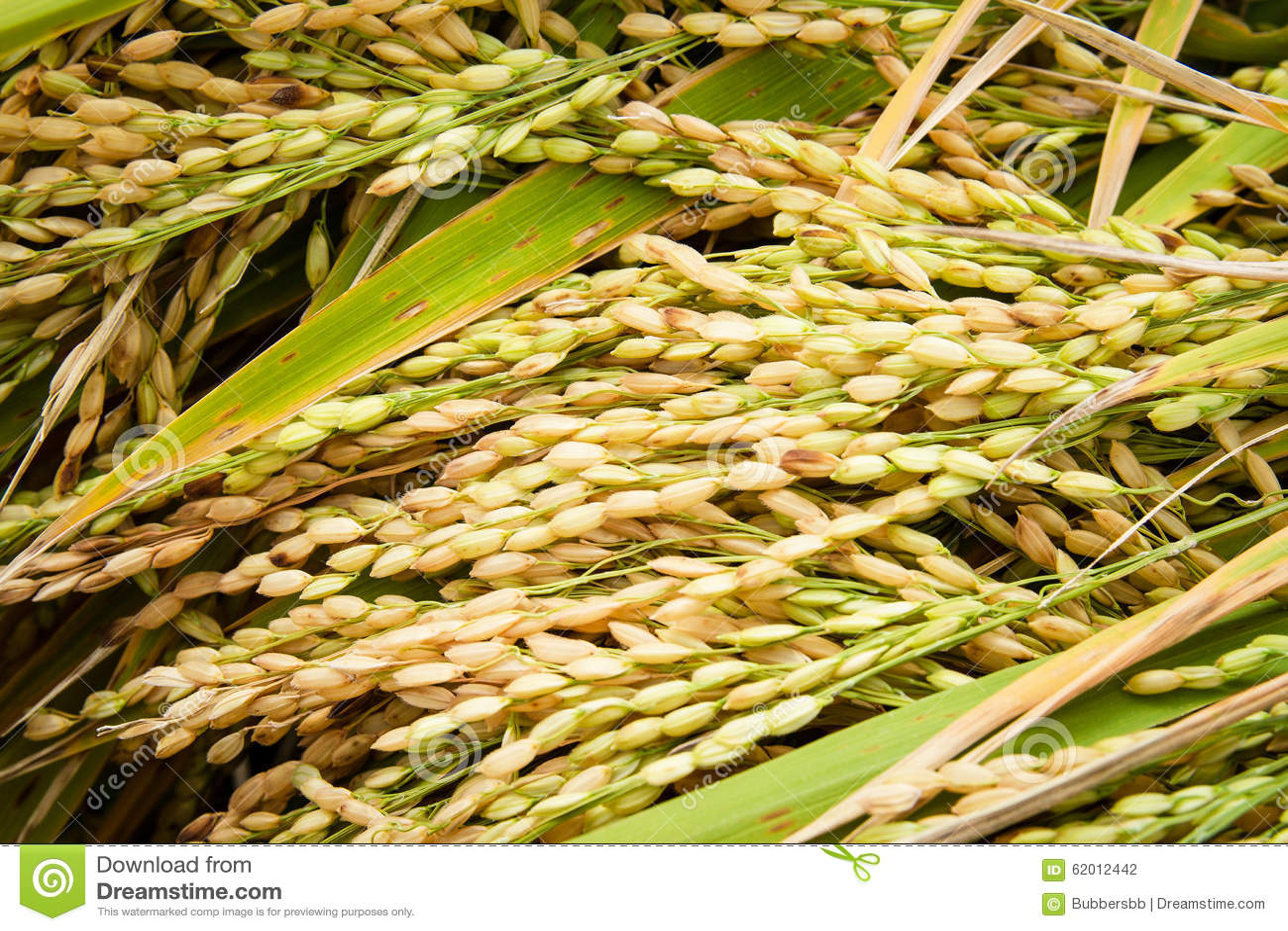 Thai Food Plantation