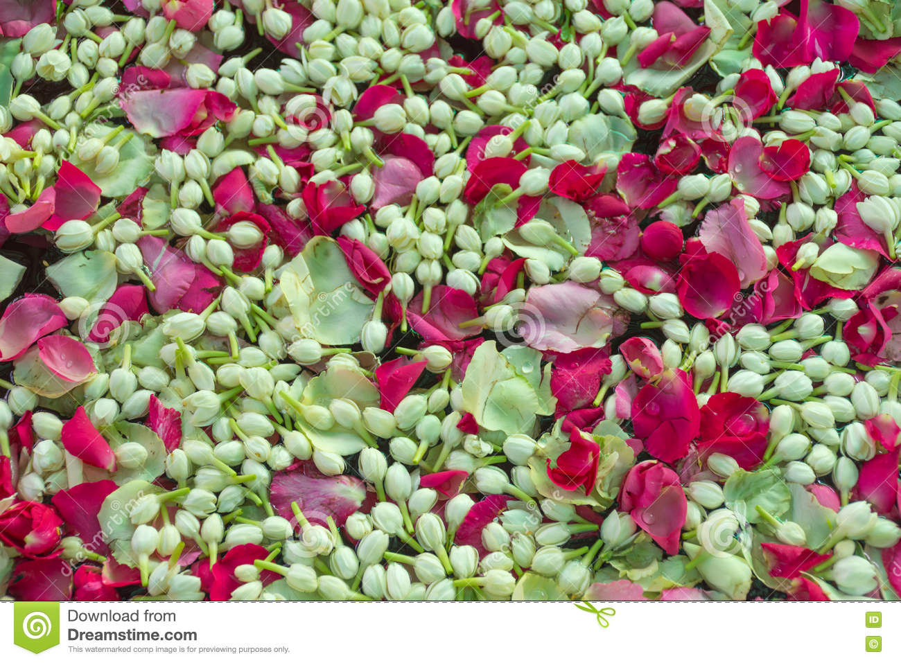 Jasmine and rose flower on water stock image image of culture jasmine and rose flower on water izmirmasajfo