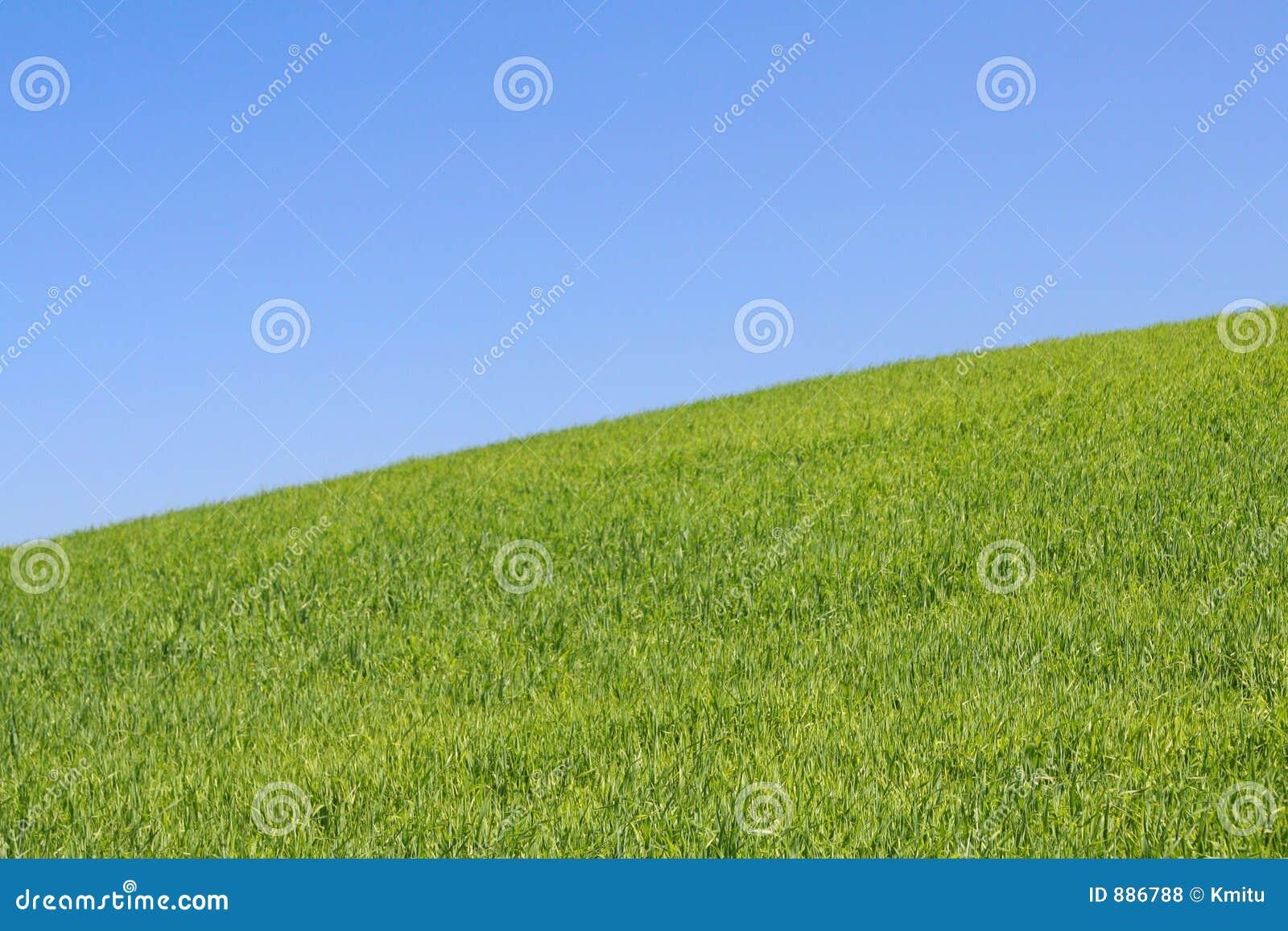 Jasna 2 łąka