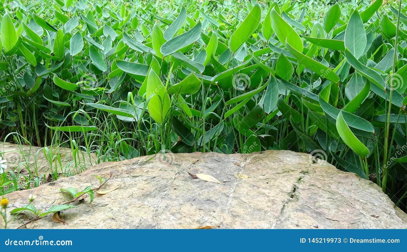 Jasny tło jasne kamienne i roślina kombinacje