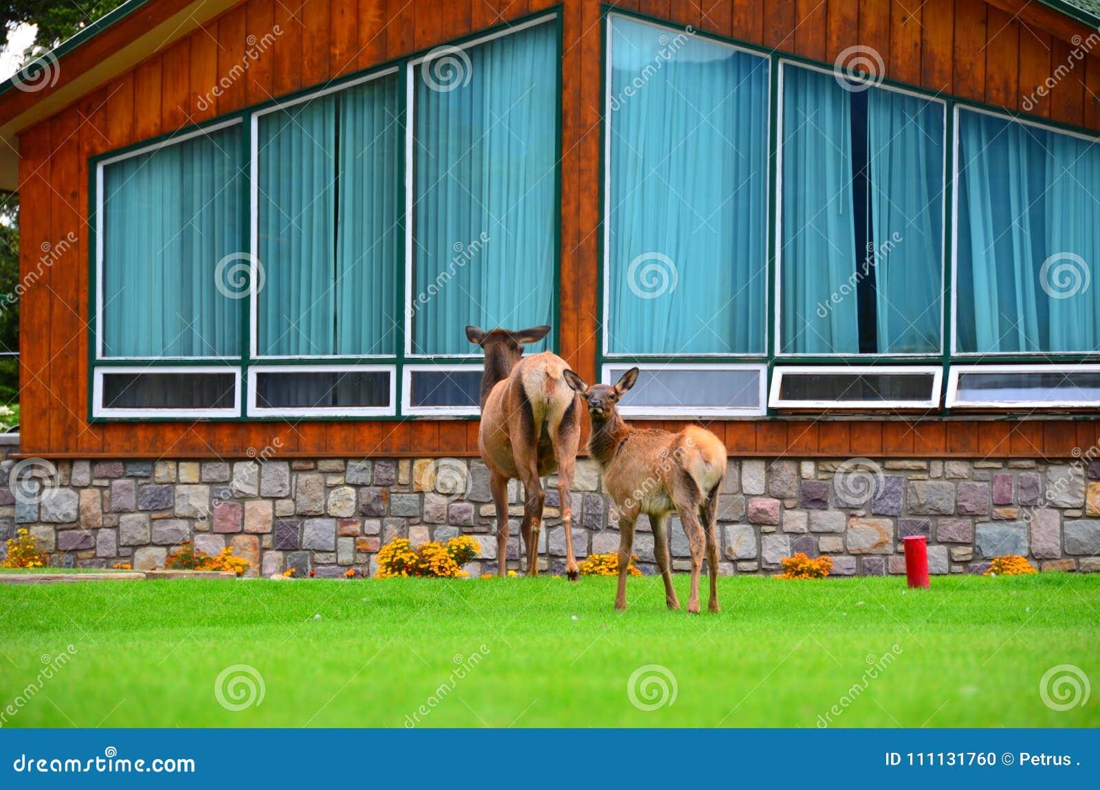 Jasper Park Lodge, Rocky Mountains, Westelijk Canada