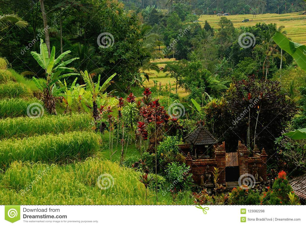 Jatiluwih Rice Terraces Of Bali Stock Photo - Image of palm