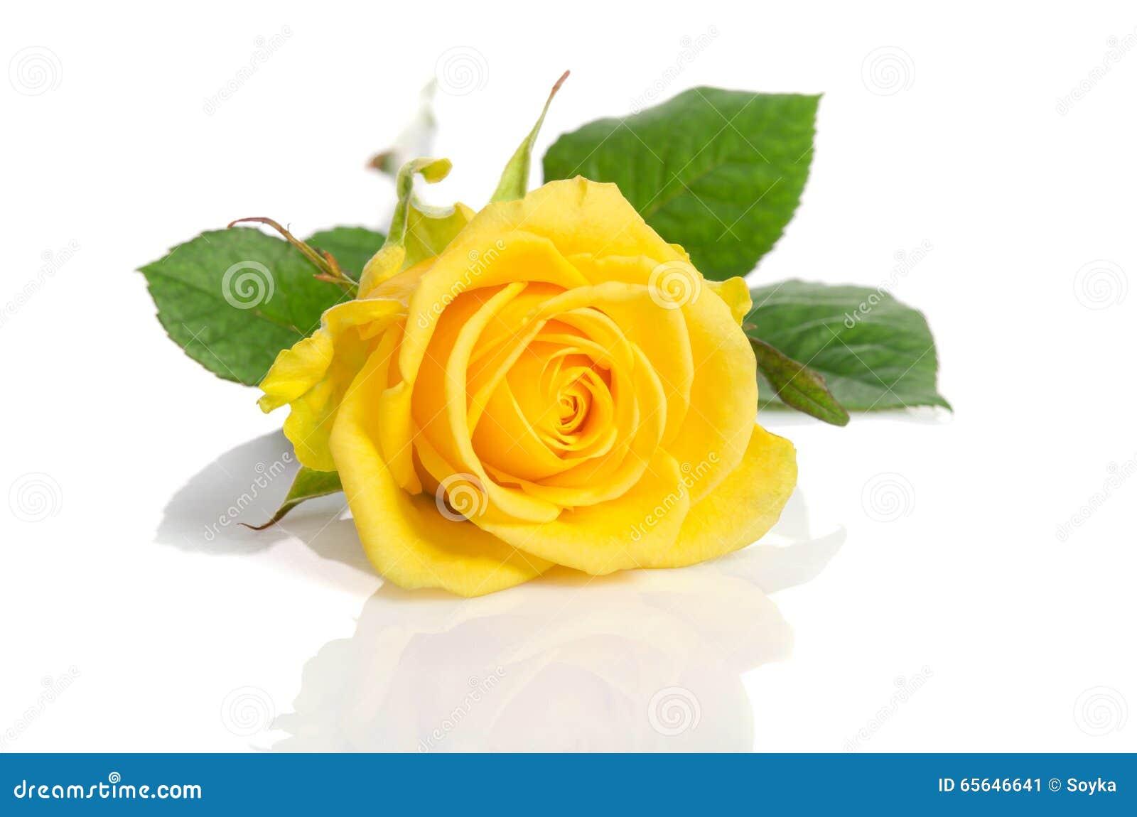 Jaunissez rose
