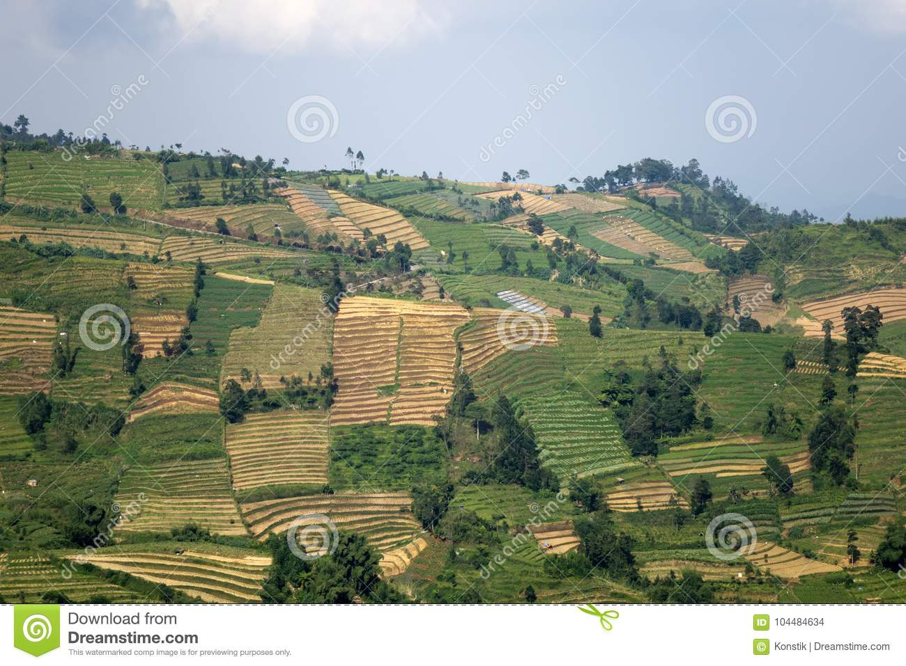 Java, Indonesia. hills with plots of rice fields of different degree of a maturity