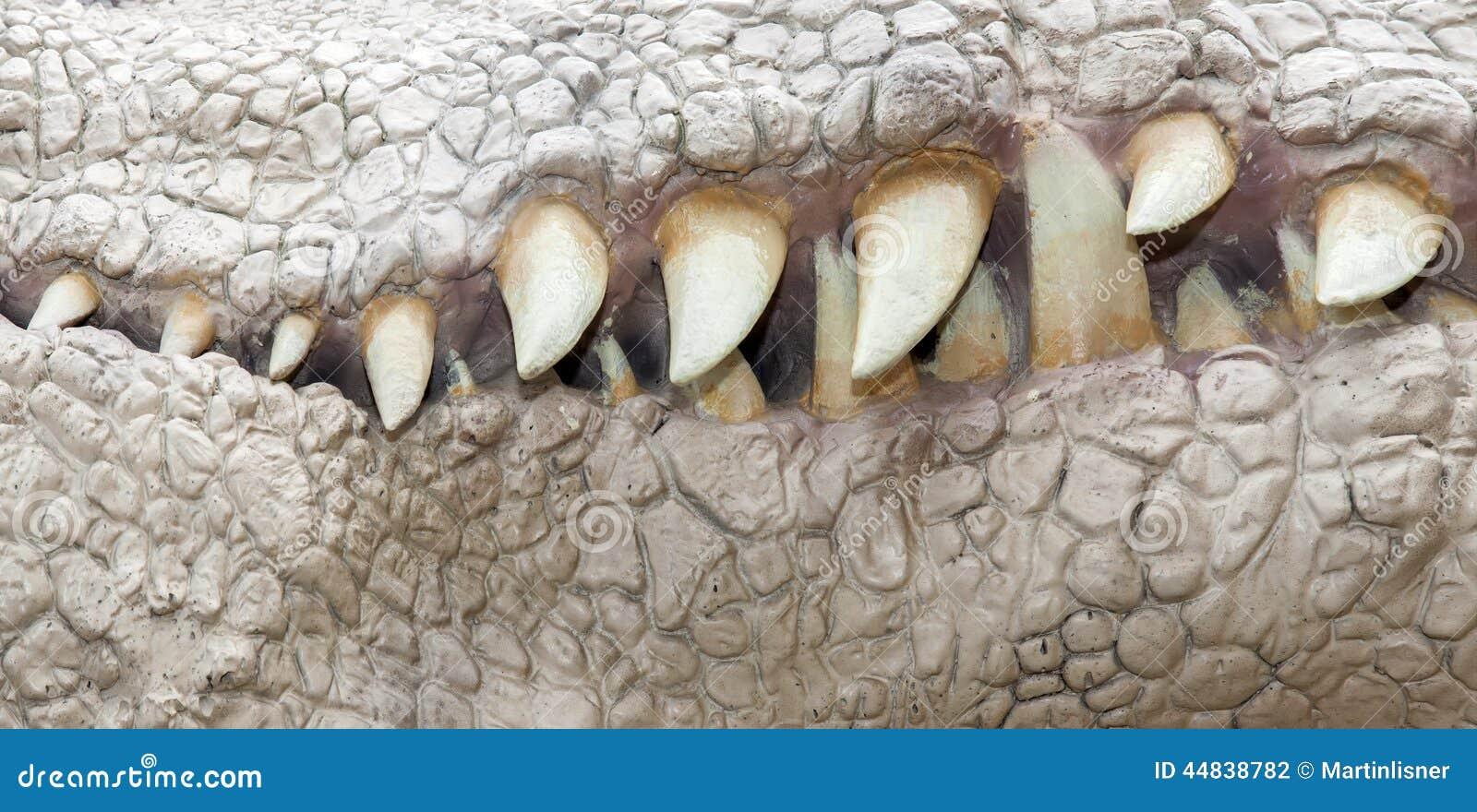 Jaw of dinosaur