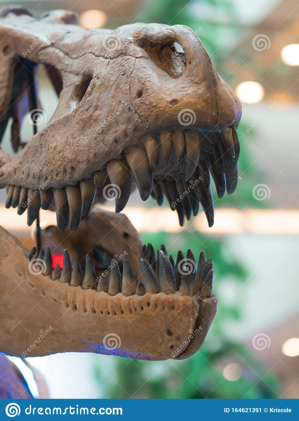 Jaw Of The Skeleton Of A Tyrannosaurus Rex, Editorial ...