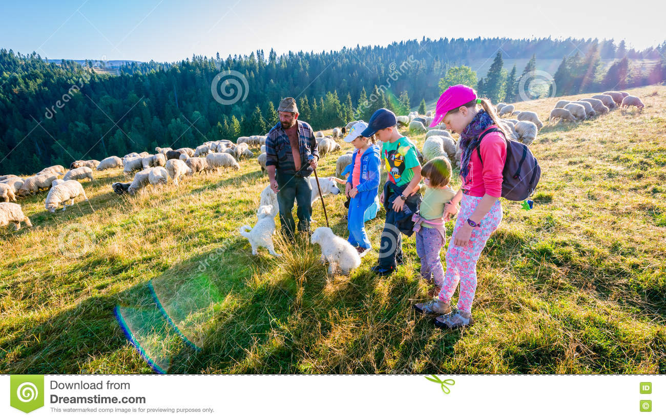 Jaworki, Poland - August 30, 2015: Summer adventure - shepherd grazing sheep in the mountains