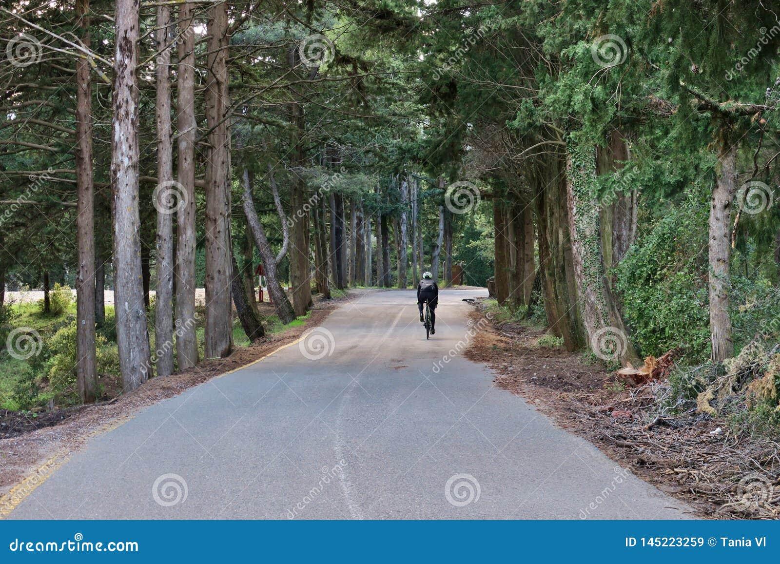 Jeździć na rowerze wzdłuż lasowej drogi na słonecznym dniu