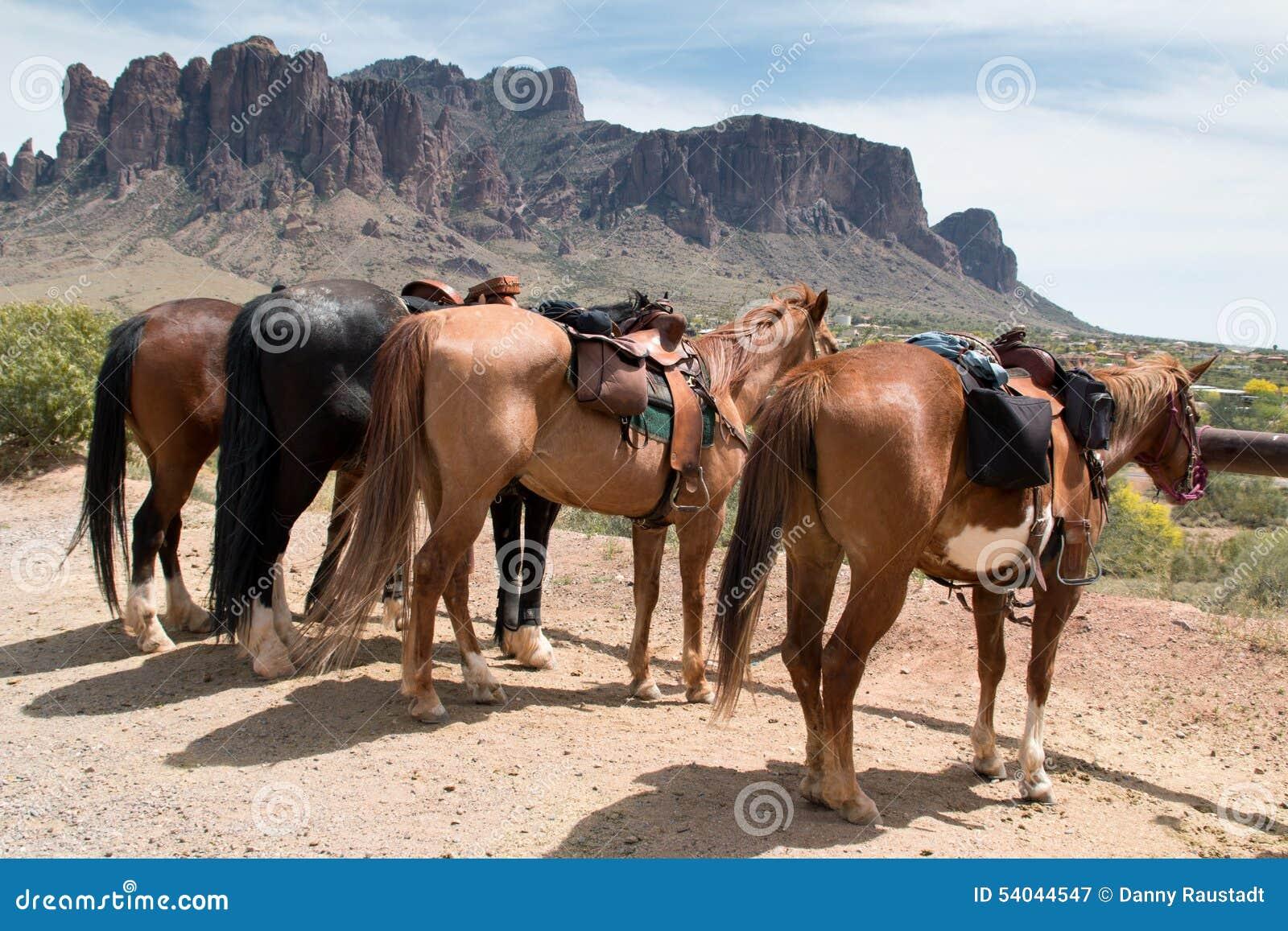 Jeździeccy konie w kraju
