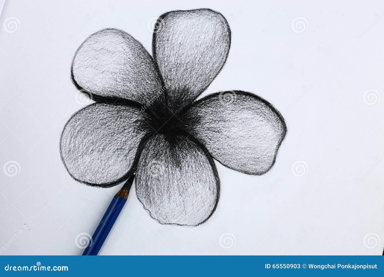 Je Dessin Au Crayon Des Fleurs Image Stock Image Du Brun Notre