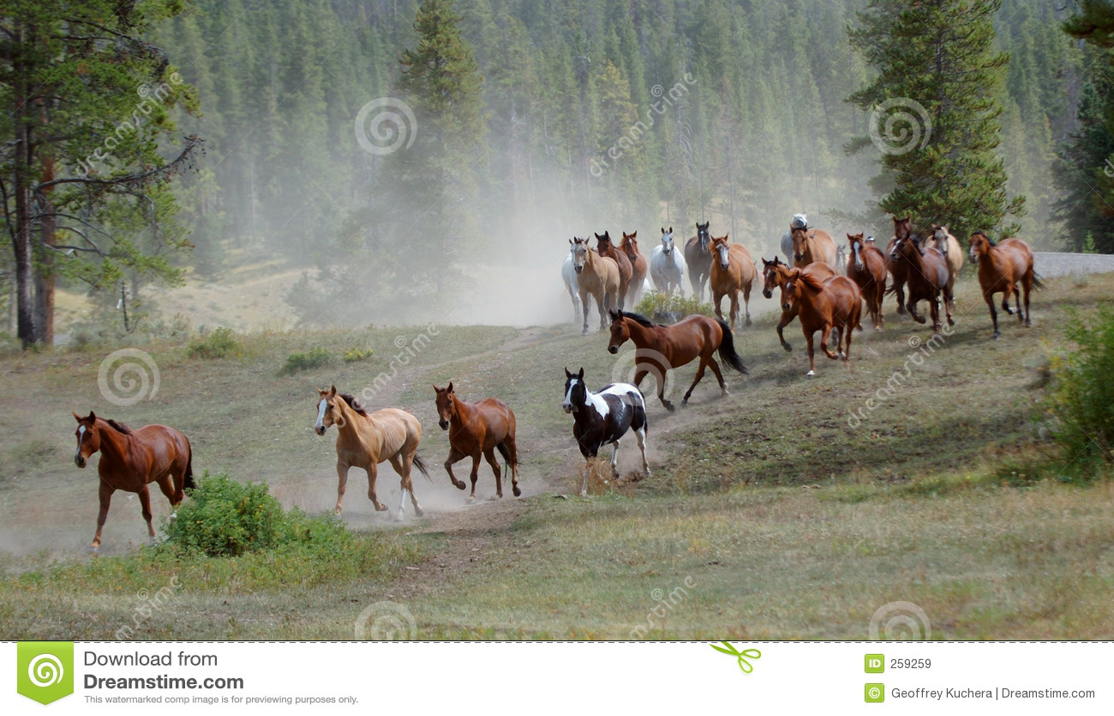 Jedź 1 koń