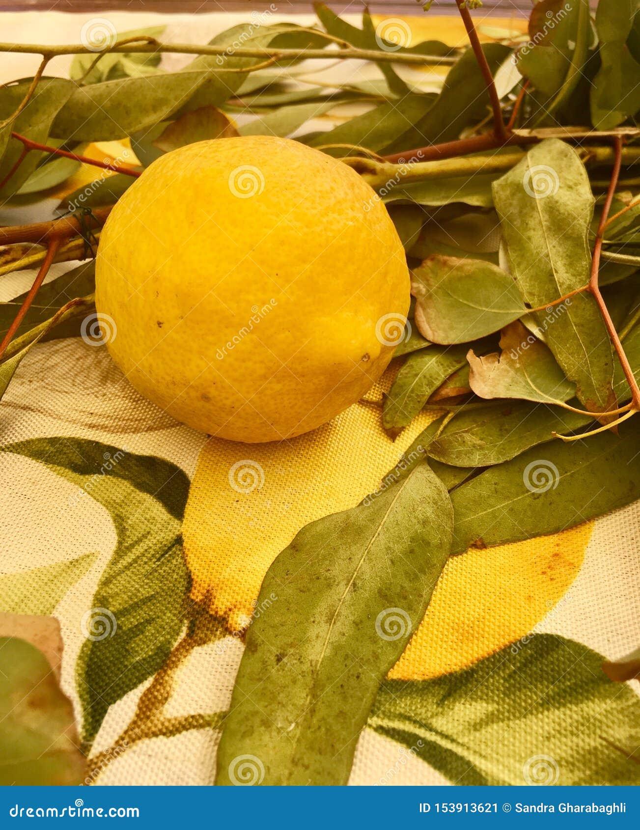 Jeden Świeża cytryna
