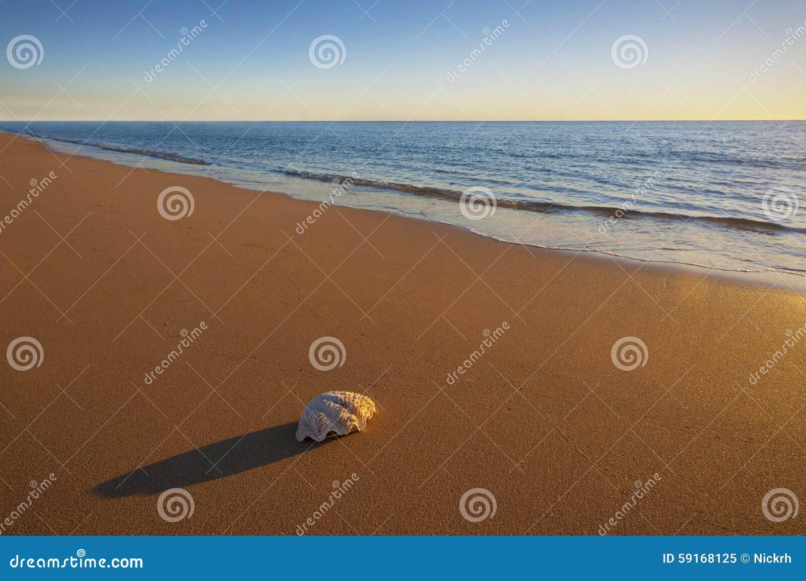 Jeden Denny Shell na plaży
