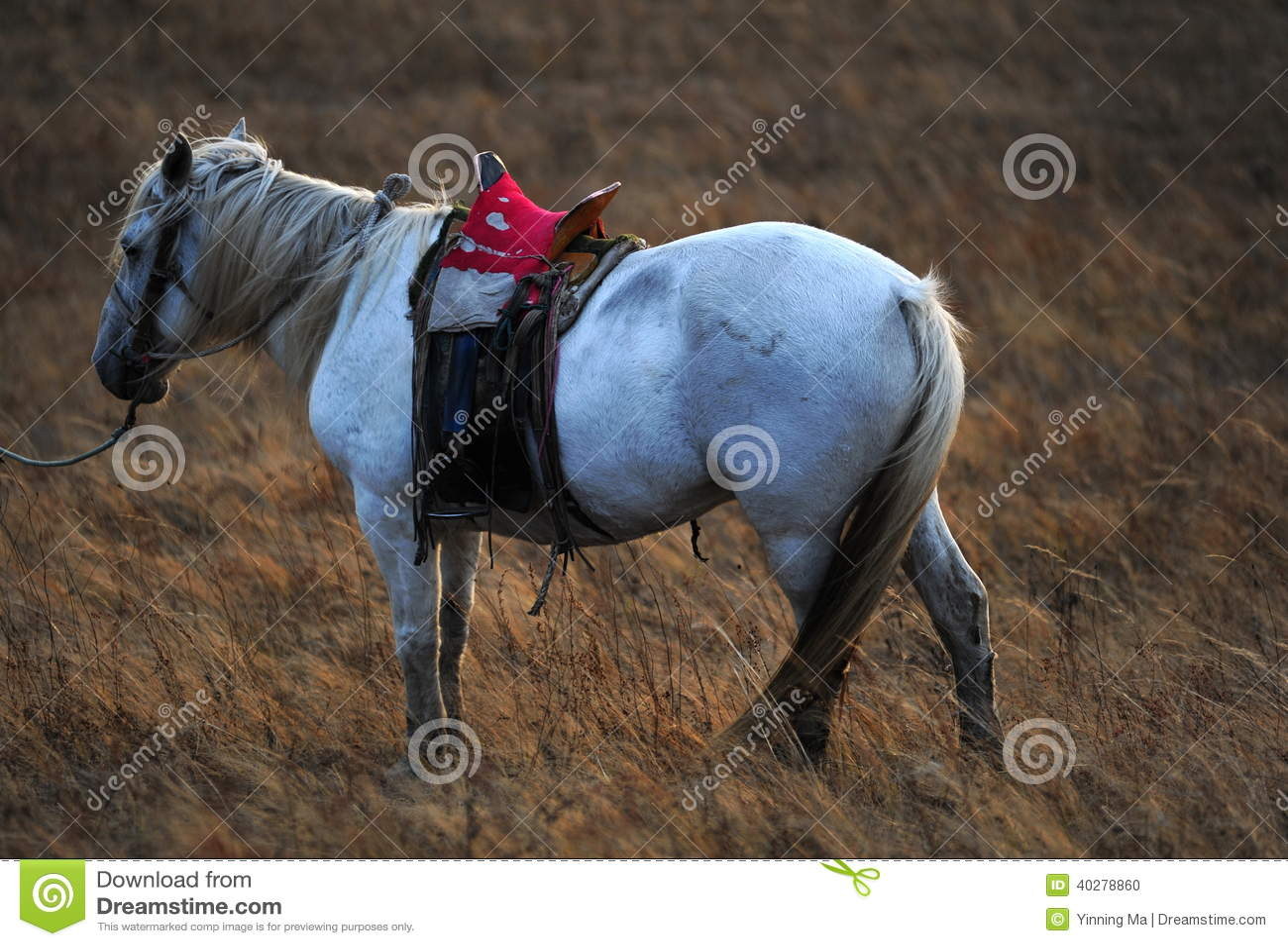 Jeden koń