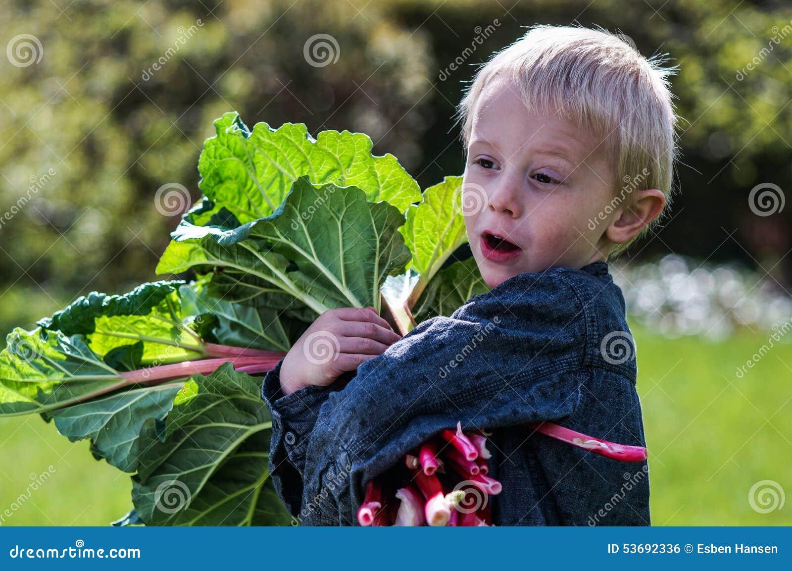 Jeden mała preschool chłopiec który żniwa jeden wielką wiązkę rabarbary w ogródzie na pogodnym wiosna dniu