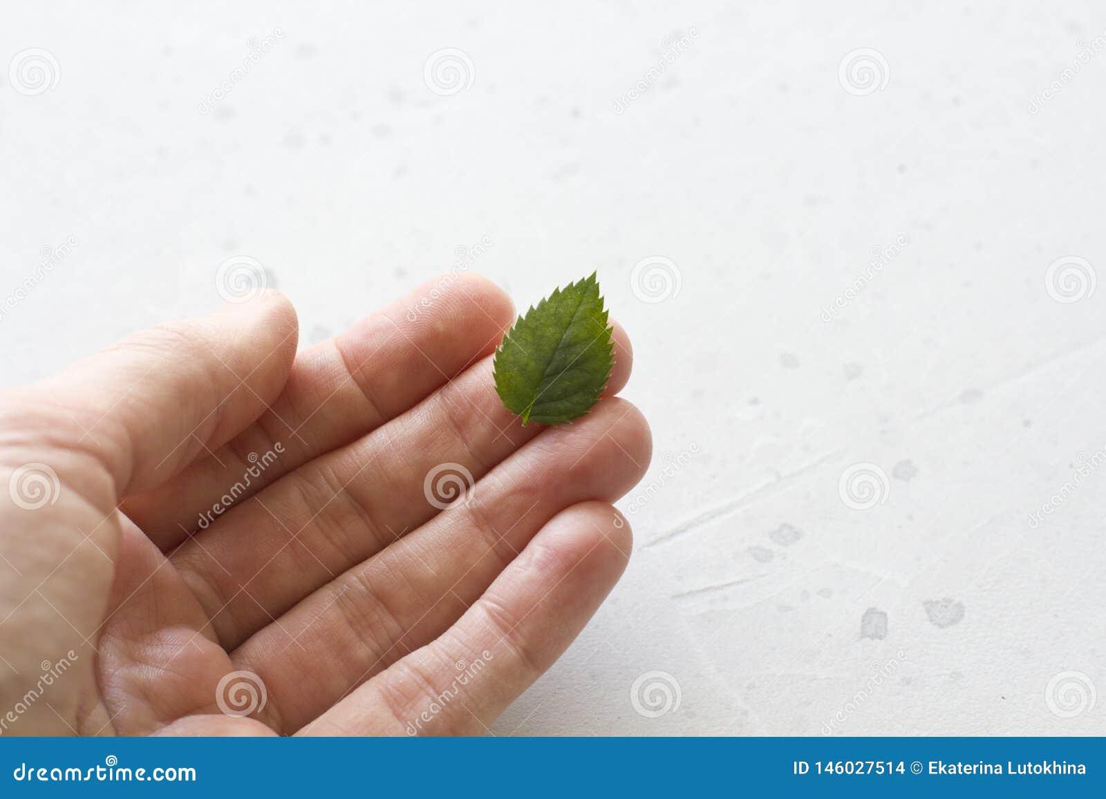 Jeden zielony li?? k?ama na r?ce na szarym betonowym tle, Ekologia, zdrowy jedzenie Mieszkanie nieatutowy, odg?rny widok, kopii p