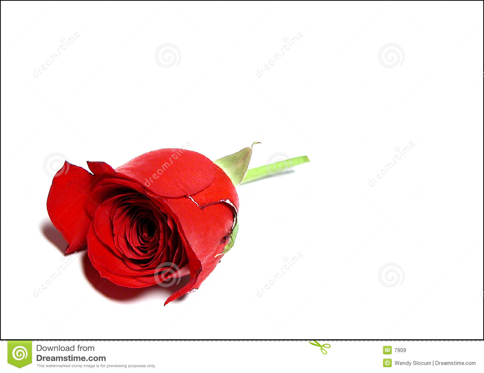 Jedna róża
