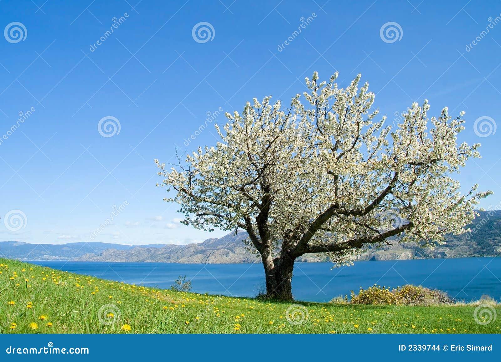 Jedno drzewo
