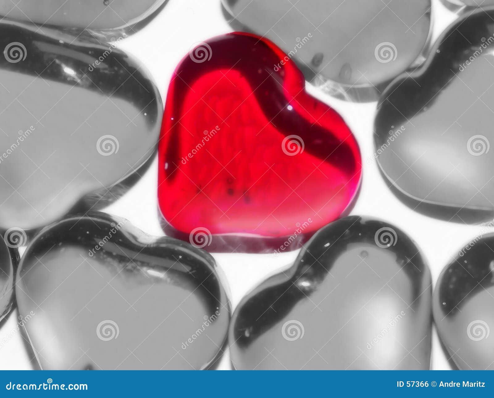 Jedyna prawdziwa miłość