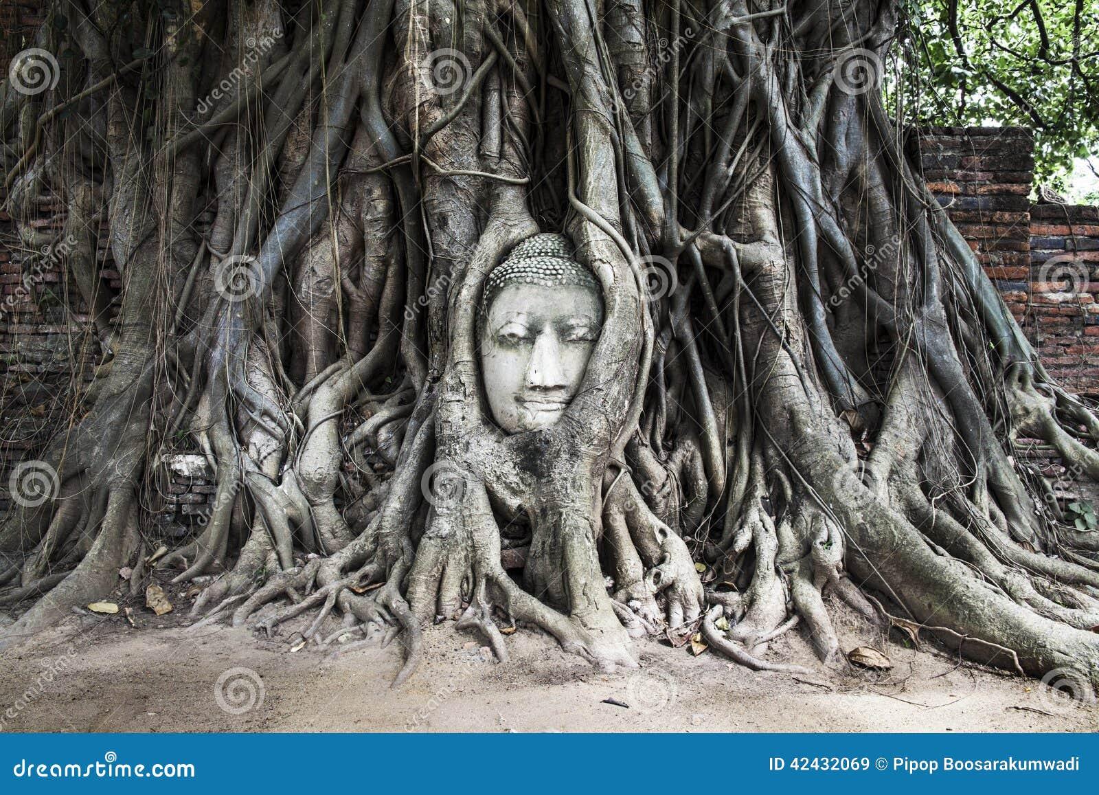 Jefe de la imagen de Buda en el árbol, Ayutthaya, Tailandia