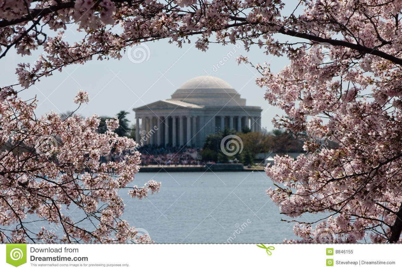 Jefferson Memorial framed by blossoms