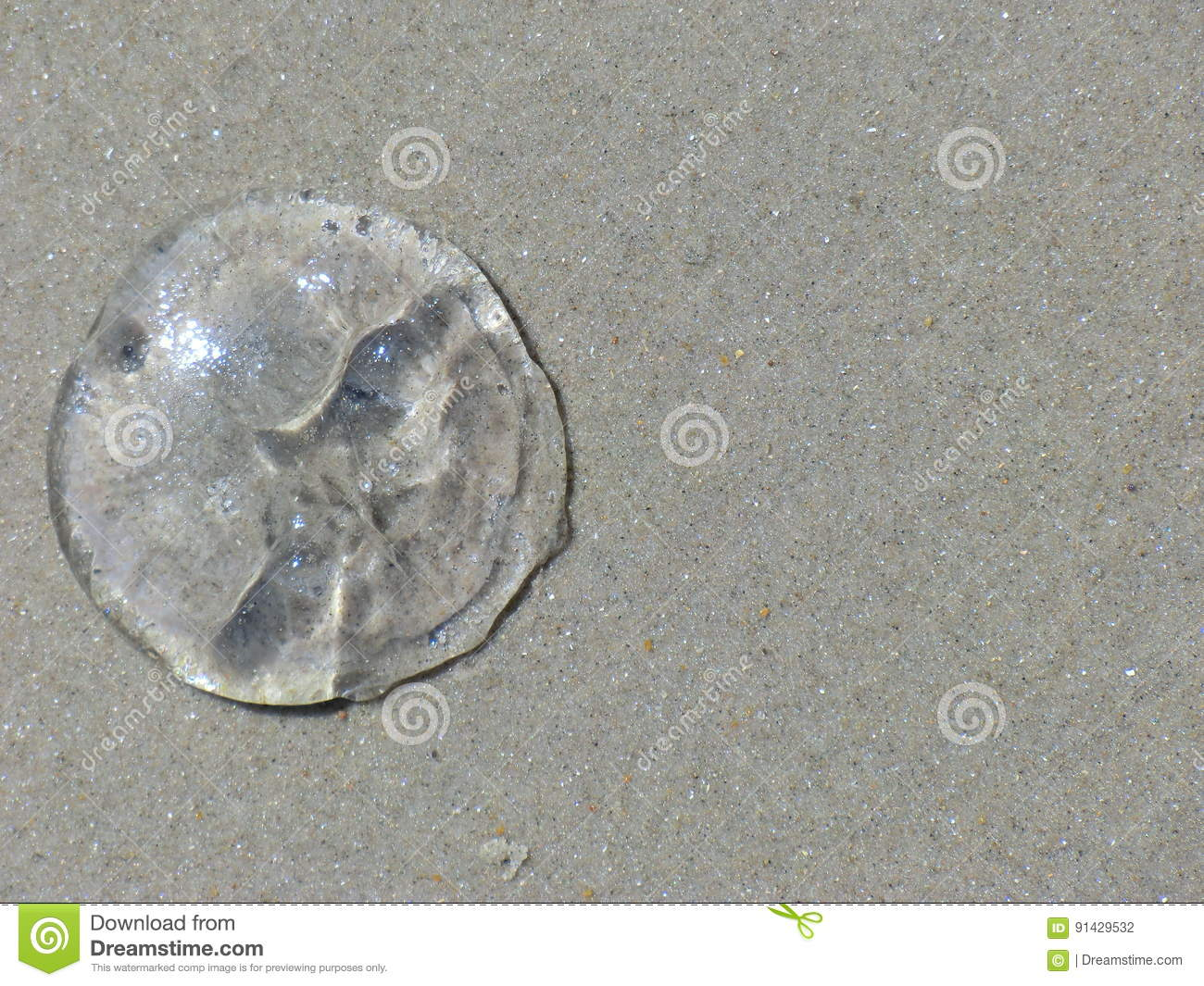 Jelly fish on sand.