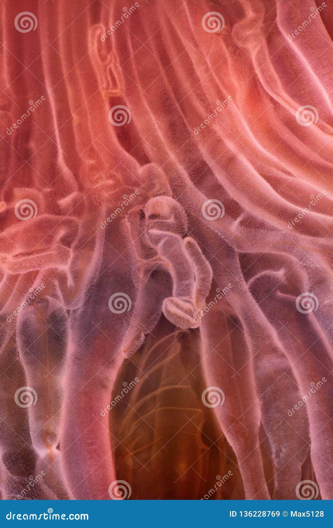 jellyfish macro structure