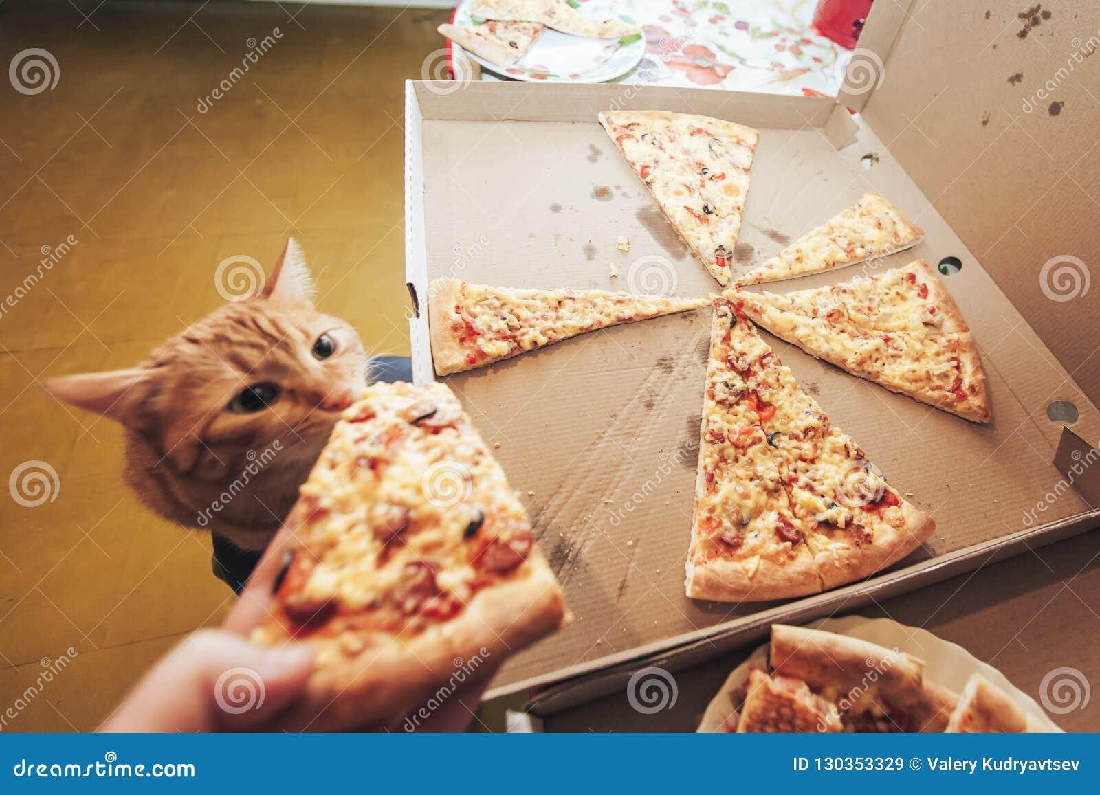 Jengibre y pizza