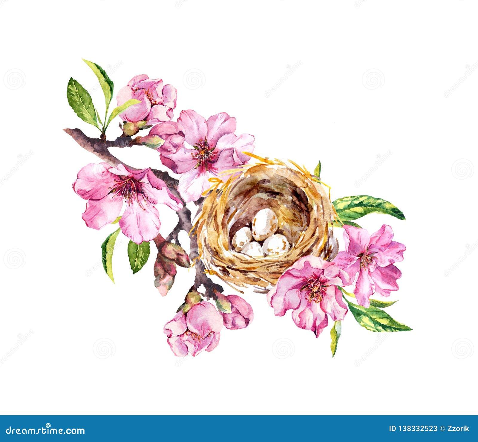 Jerarquía con los huevos en la flor de cerezo, flores de Sakura en tiempo de primavera Ramita de la acuarela