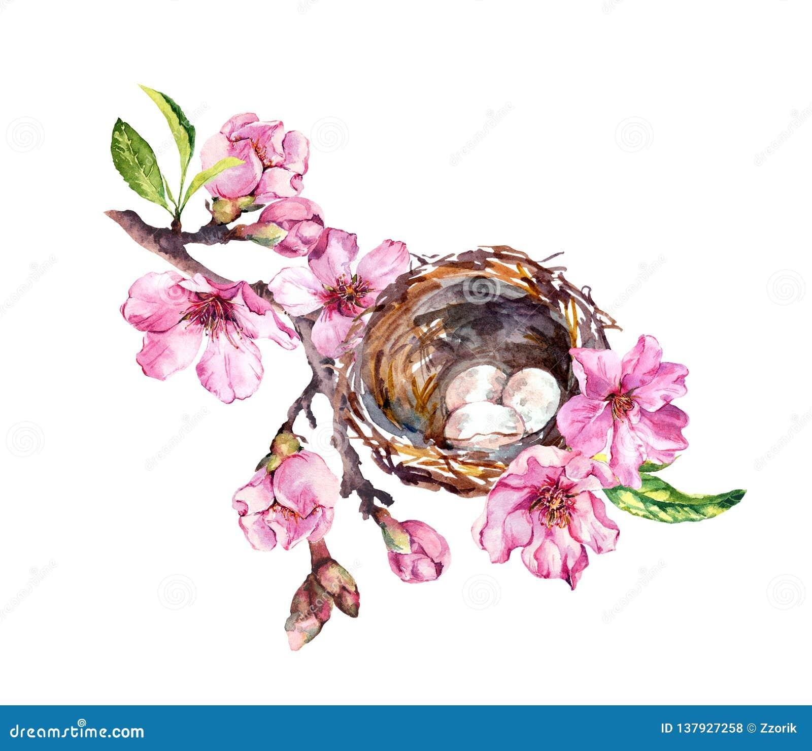 Jerarquía con los huevos en rama de la flor de cerezo, flores de Sakura en tiempo de primavera Ramita de la acuarela