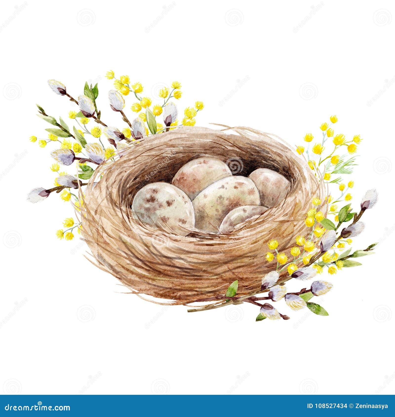 Jerarquía del pájaro de la acuarela con los huevos