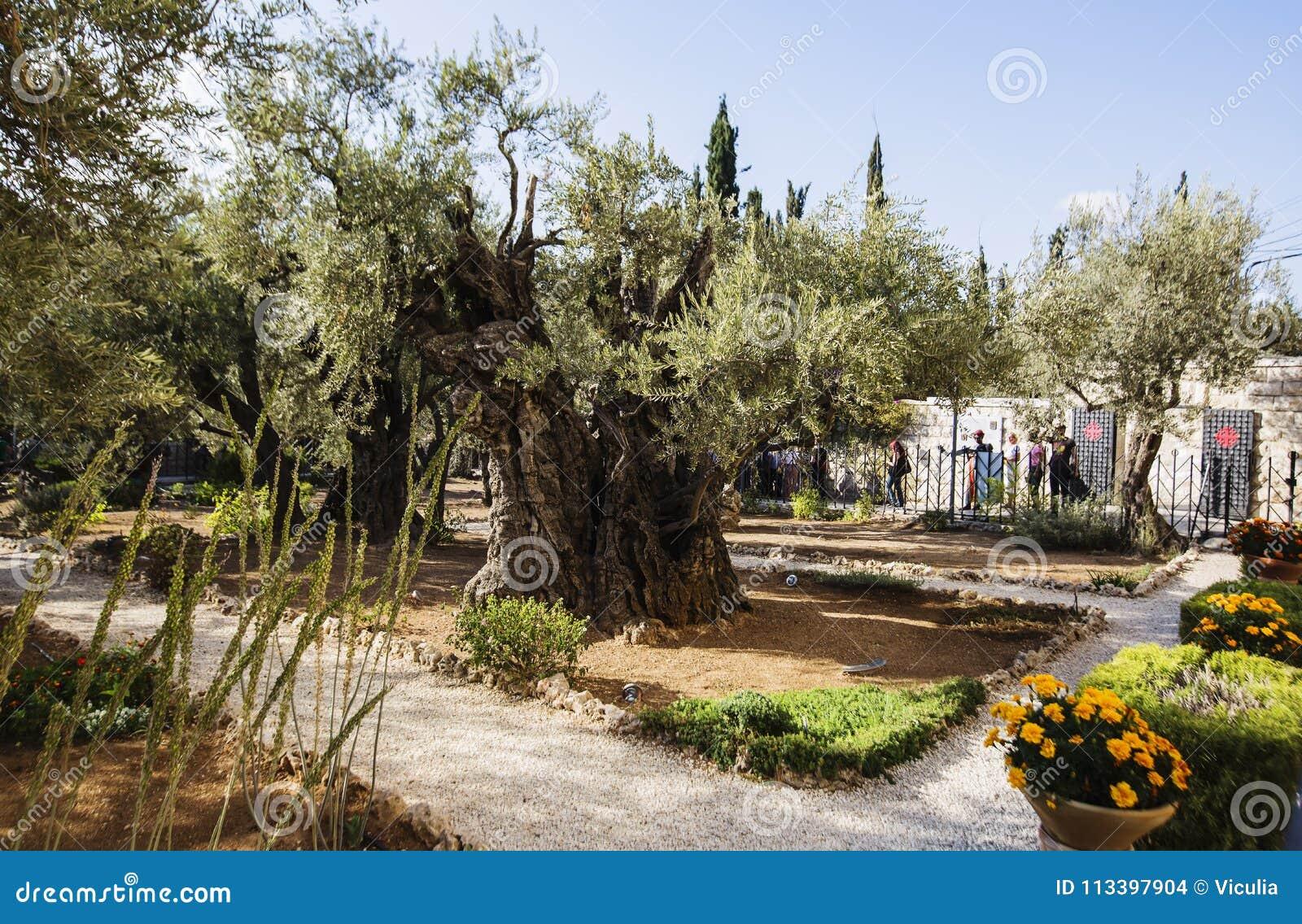 JERUSALEM, ISRAEL-OCTOBER 5, 2017: The Garden Of Gethsemane On The ...