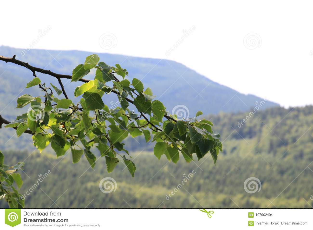 Jeseniky Mountains Czech Republic Stock Photo