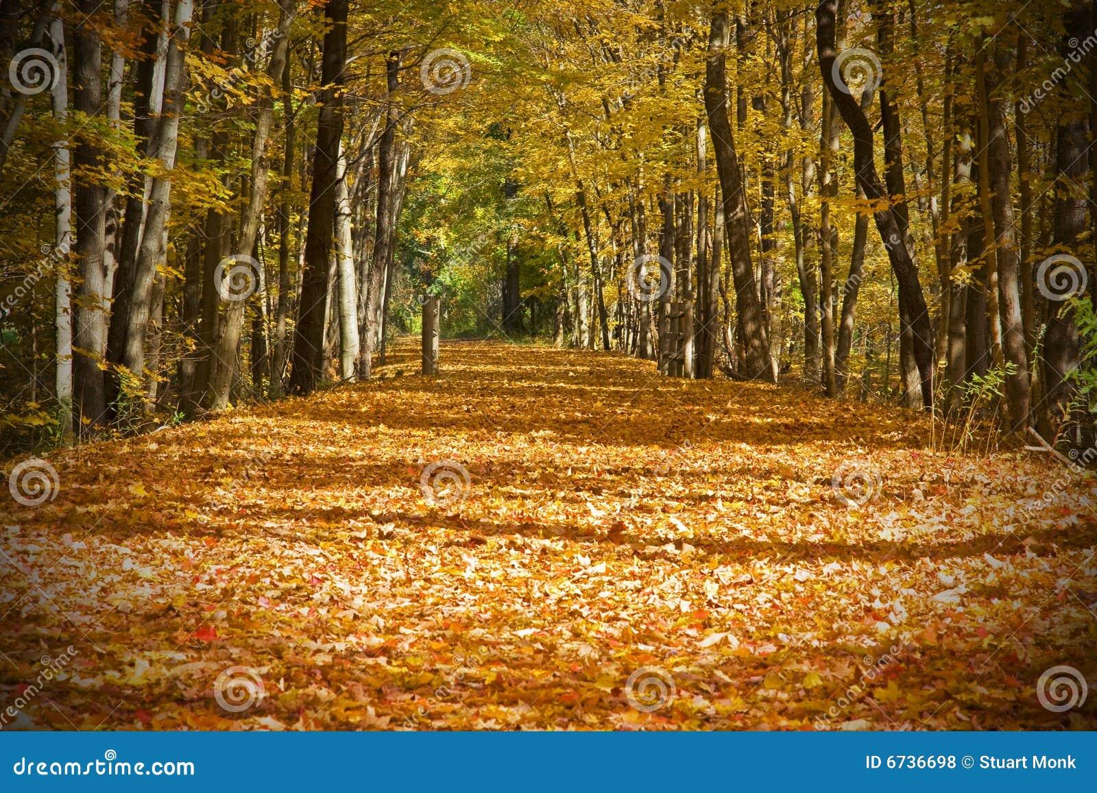Jesień ślad