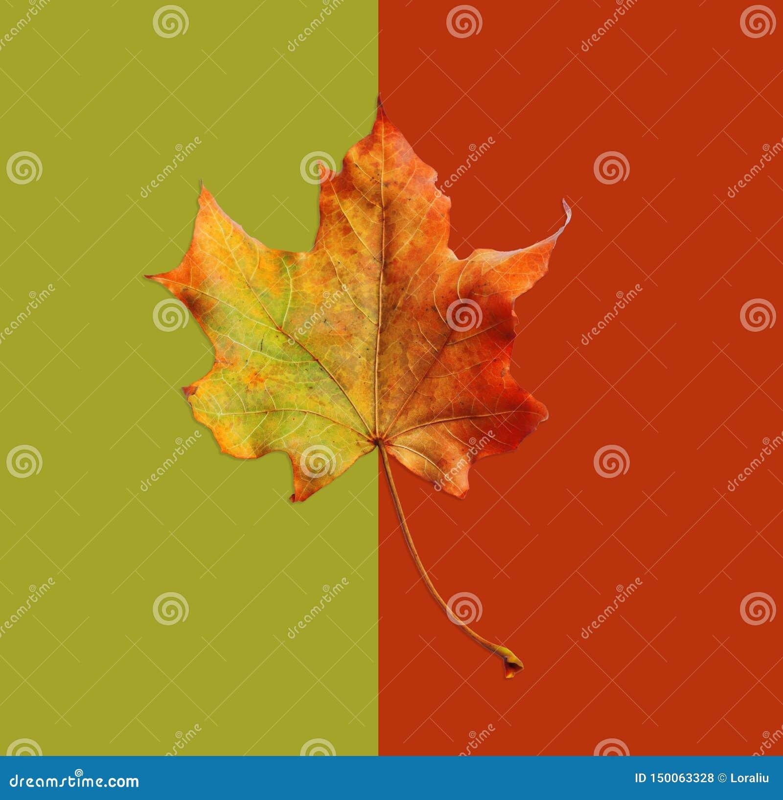 Jesień żółty liść na abstrakcjonistycznym tle