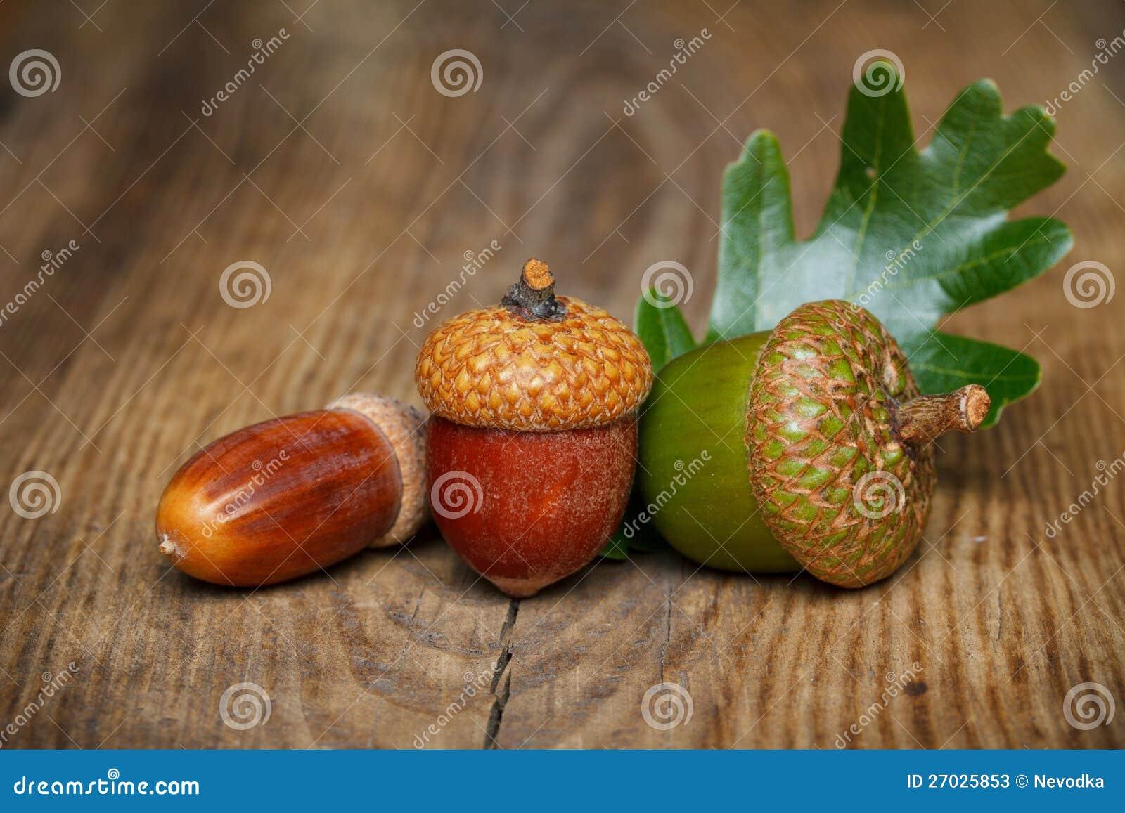 Jesień acorn
