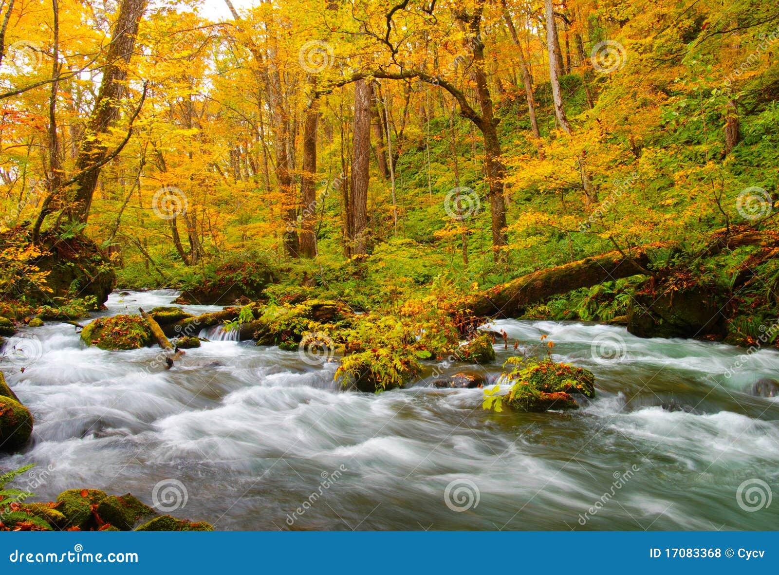 Jesień barwi oirase rzekę