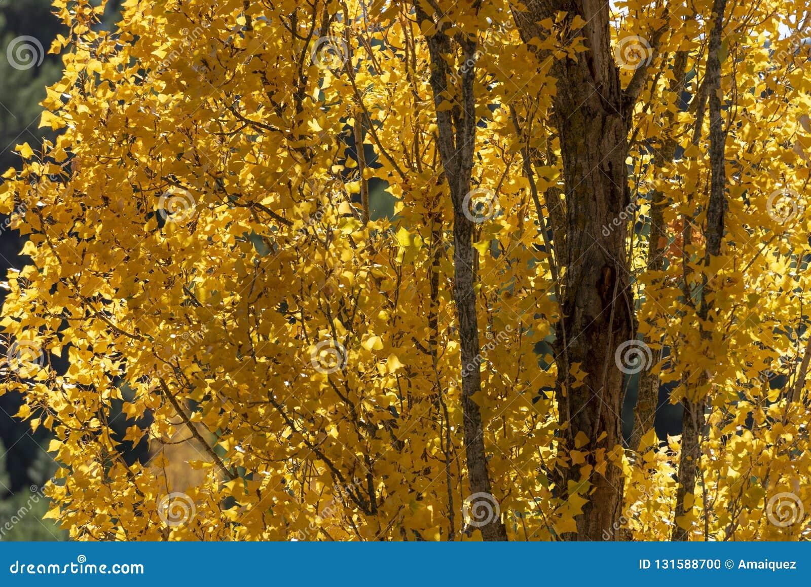 Jesień barwi, Rio Mundo źródło, Naturalny park Los Calares Del rÃo Mundo y De Los angeles Sima, sierra de Alcaraz y del Segura