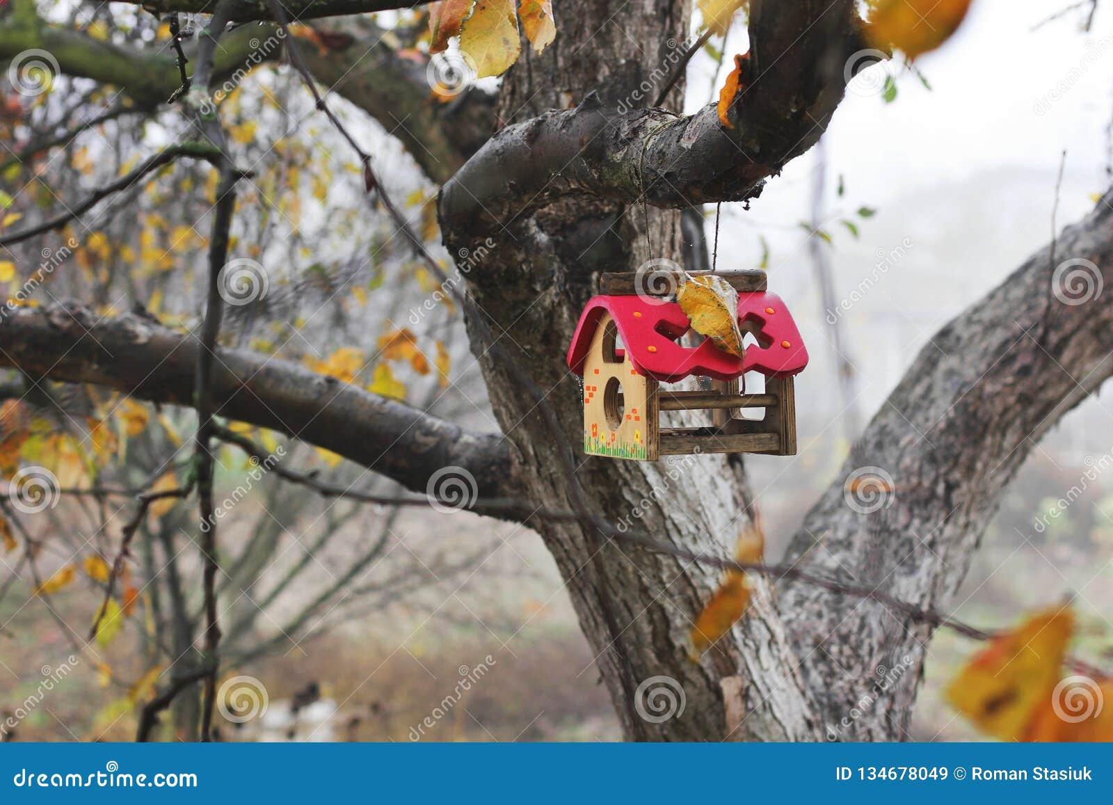 Jesień birdhouse opuszczać drzewa gałązek kolor żółty