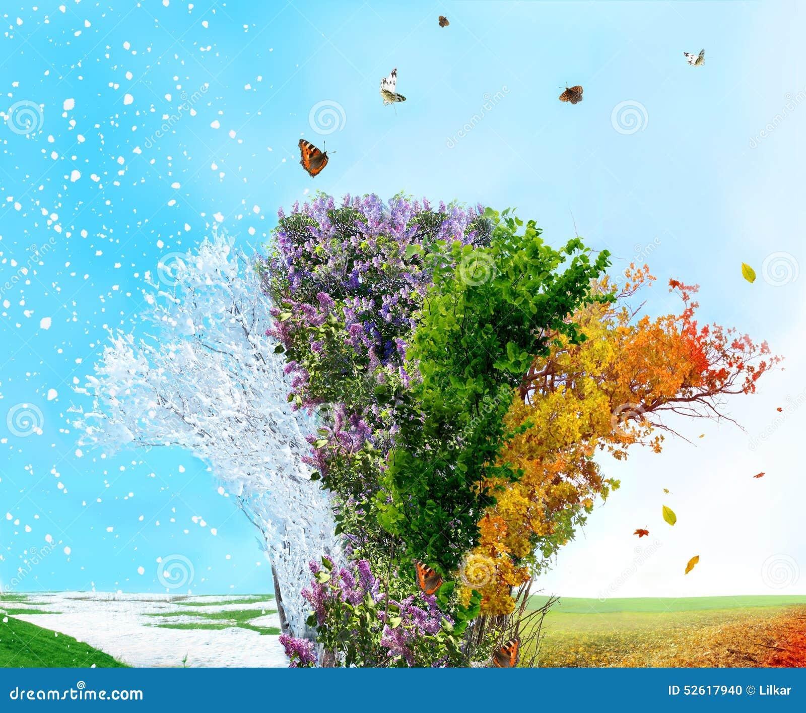 Jesień cztery rnwinter sezonu wiosna lato drzewo