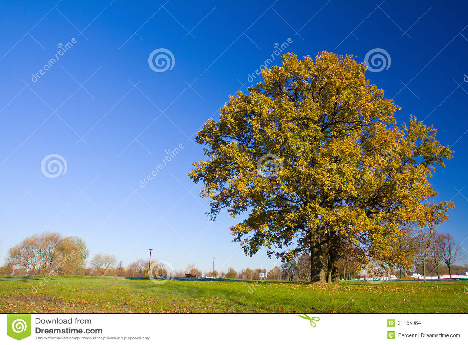 Jesień drzewo osamotniony dębowy