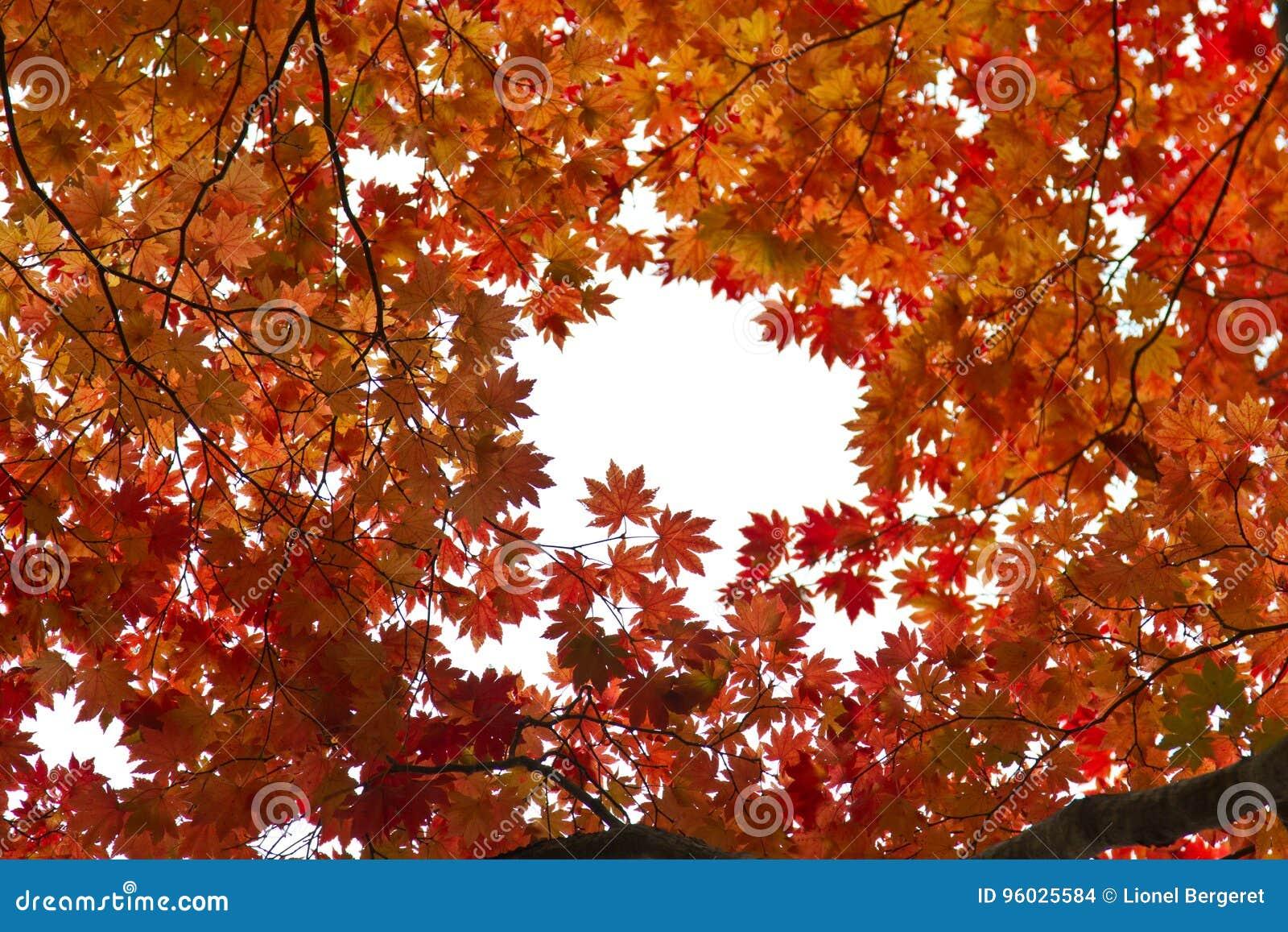 Jesień kolory w Tokyo