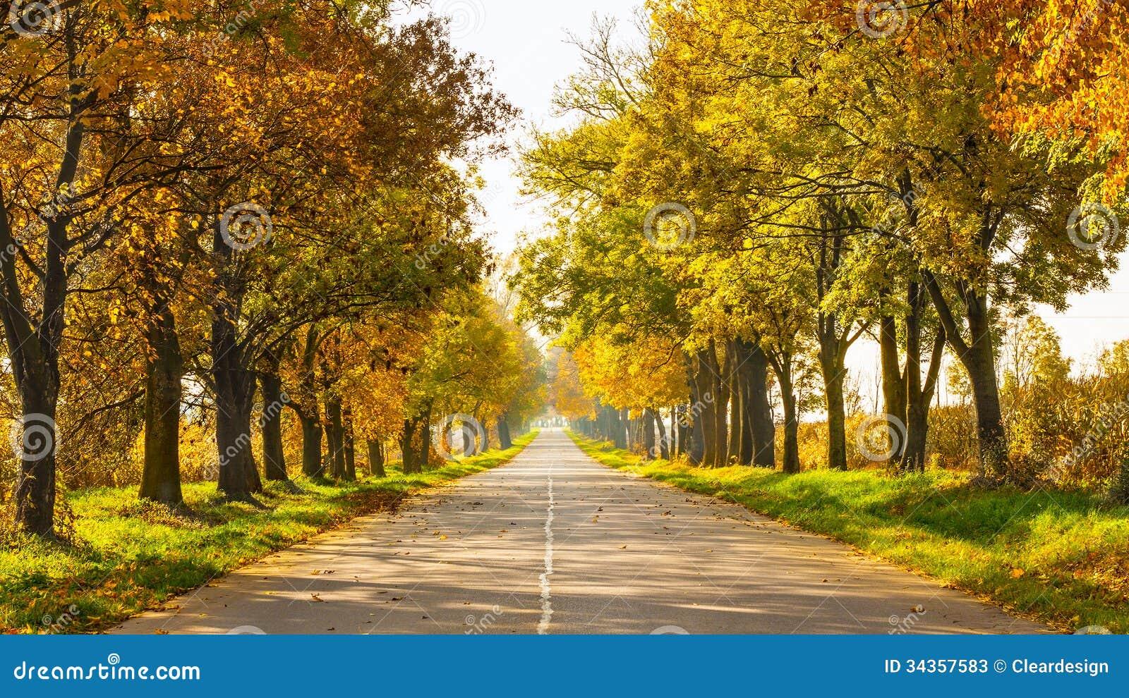 Jesień krajobraz z drogowymi i złocistymi drzewami along